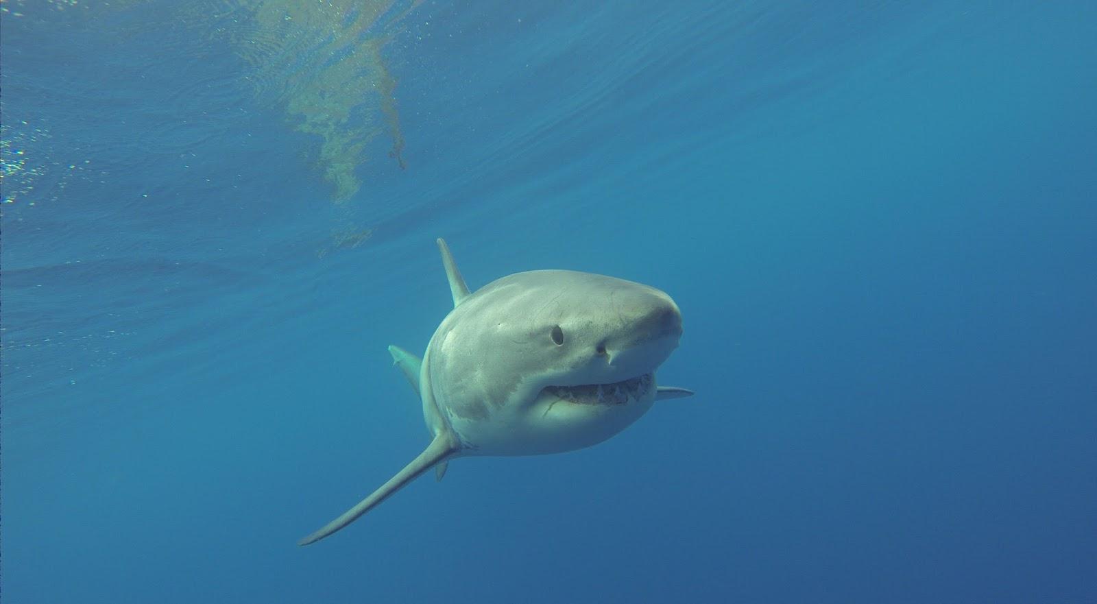 Abenteuer Hai Tauchen
